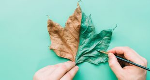 Leaf_cover